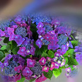 flowers by Fereshteh Molavi - Flowers Flower Arangements ( purple, blue, green, leaves, flowers )