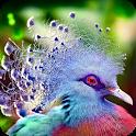 Beautiful Bird Wallpaper icon