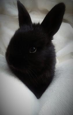 Dark Bunny di AB96