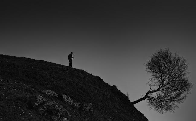 L'uomo e l'albero di Tiziana Detoni