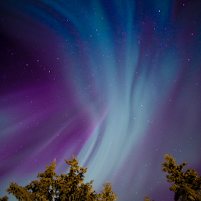 Angel sky by Charles Adam - Landscapes Starscapes ( pines, colors, aurora, aurora borealis, northern lights, north, nightscape, northern, colourful, night photography, color, stars, trees, night, pine )
