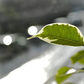 that leaf by Patrik Voicu - Nature Up Close Leaves & Grasses ( leaves, leaf )