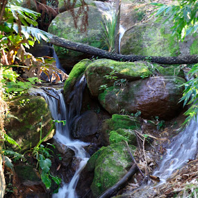 Peaceful by Jan Crawford - Landscapes Waterscapes ( water, spring bluff, nature, waterfall, landscape photography,  )