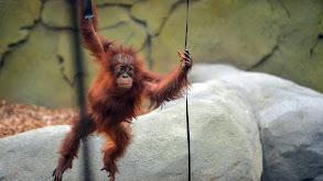 The Secret Life of the Zoo thumbnail