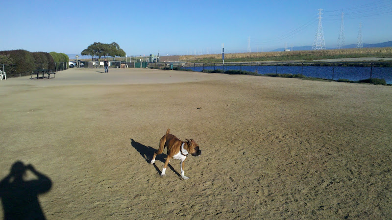 Photo: Echopuppy running around, being a dog!