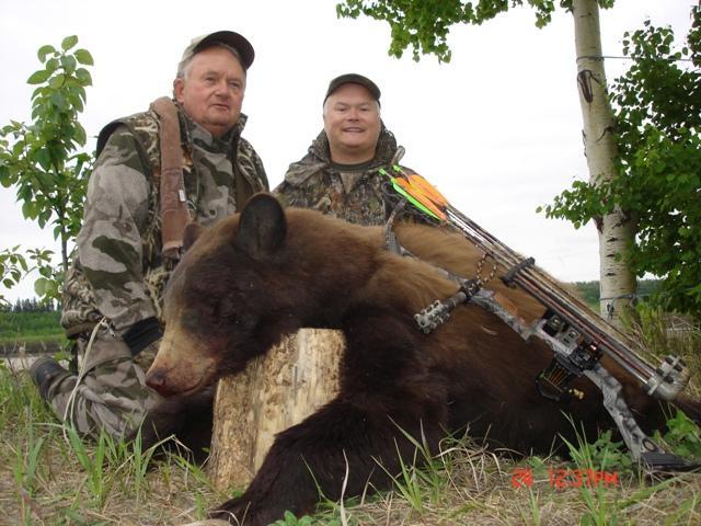 cinnamon phase bow bear