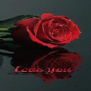 Shining Rose Live Wallpaper