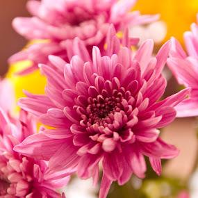 Flower-3-Pixo-2000.jpg