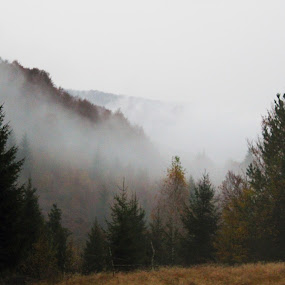 For in the mountains by Alexandru Lupulescu - Landscapes Mountains & Hills ( mountains, fog )