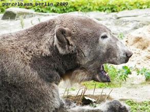 Photo: Soviel Action macht muede, meint Knut ;-)