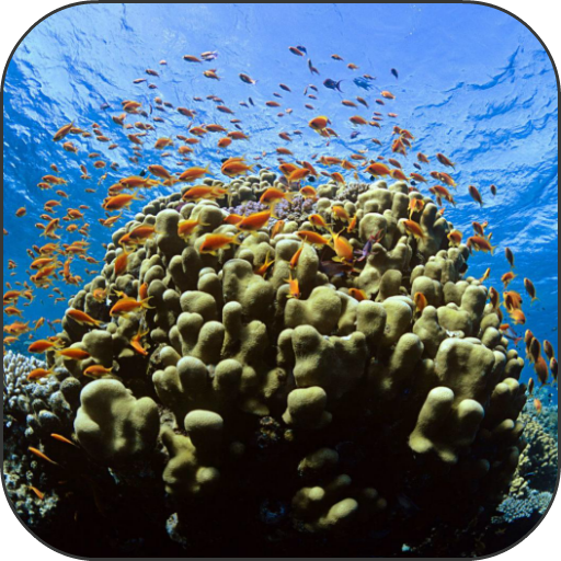 Coral Reef Fish Video LWP