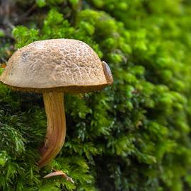 Fungus by Natasja and Martijn - Nature Up Close Mushrooms & Fungi ( mushroom, macro, autumn, summer, fungus )