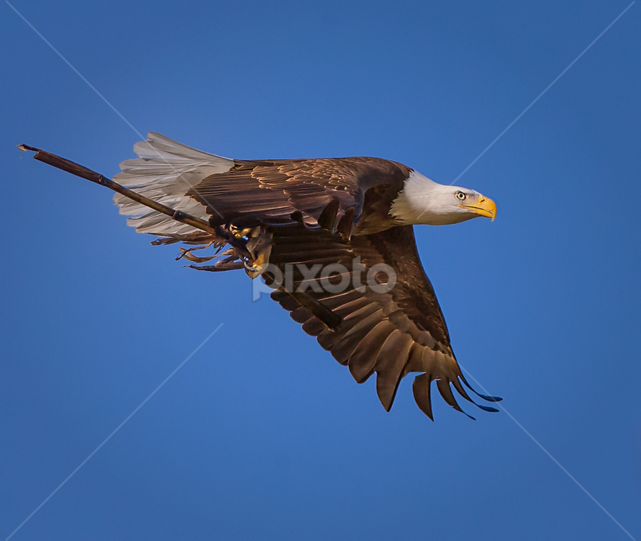 Eagle with Long Stalk by Don Holland - Animals Birds