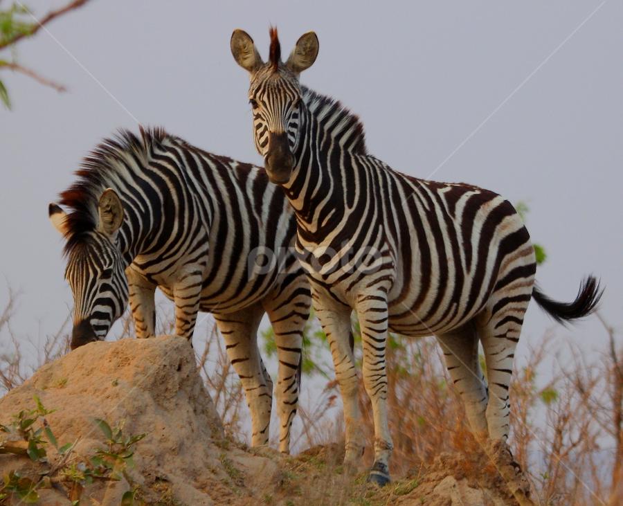 by David Moffatt - Animals Other Mammals