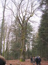 Photo: le chêne de la Vierge
