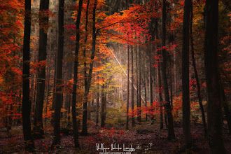 Photo: Hi G+  Orton rime avec automne! Si vous êtes nouveau ici et que vous souhaitez en savoir plus sur cet effet simple à réaliser, merci de visiter la page, Hommage à Michael Orton: http://bit.ly/bfrQNV. A lire aussi car c'est le bon moment, Le Guide de la Photo d'Automne: http://bit.ly/TaTqQd  Happy monday ;-)  #fallphotos #autumnphotography #naturephotography #photography #forestphoto