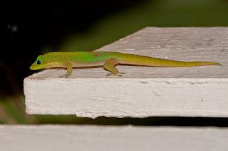 Photo: Lizard.