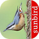 Bird Id - British Birds icon