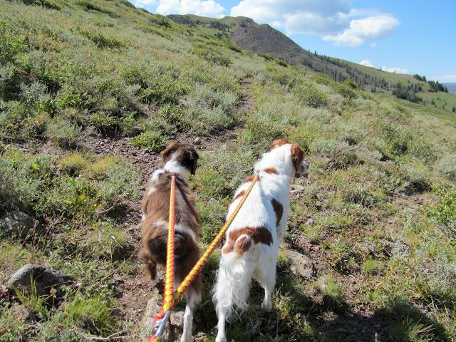 Boulder and Torrey on-leash