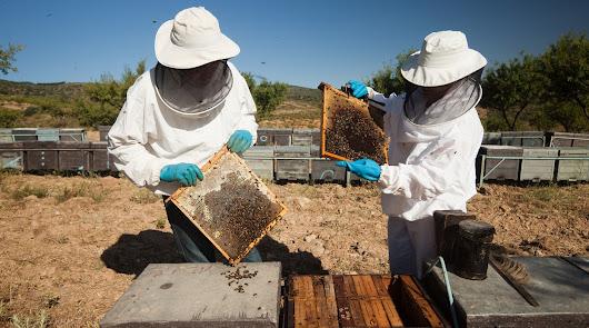 La Junta abona 6,7 millones en ayudas para apicultura y ganadería
