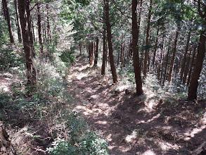 林道の横を降りる