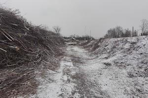 Wycinka drzew wzdłuż linii 183