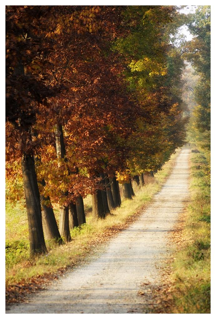 Le strade d'Autunno di Picchiolino
