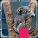 Deluxe puzzle - Cute Animals icon