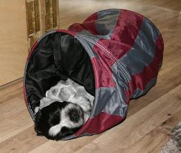 Photo: da hat sich Ellie einen tollen Schlafplatz gesucht