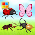 Insects Cards (Learn Languages) icon