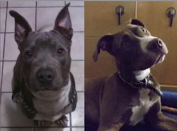 My Pups, Ajax And Juno!