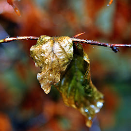 Golden    green by Gordon Simpson - Nature Up Close Leaves & Grasses