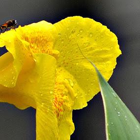full Of Honey by Jayanta Roy - Nature Up Close Flowers - 2011-2013