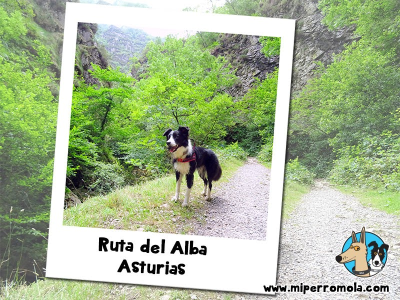 5 Rutas con Perro para Disfrutar del Senderismo Ruta del Alba Asturias