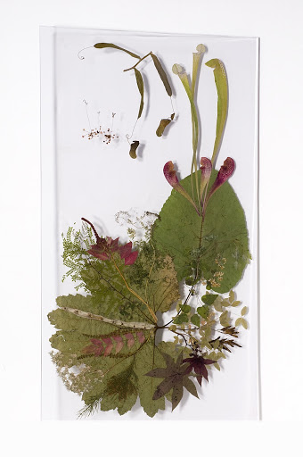 Acrylic panels with natural plant insert Angiosperms: thorns, traps and poisons