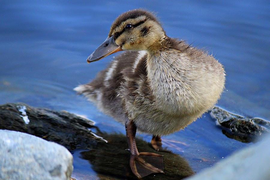 by Inger Lefstad - Animals Birds