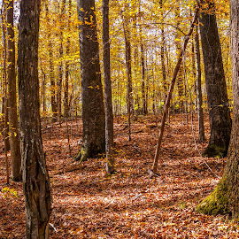 Fall has fell by Joe Machuta - Landscapes Forests