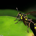 Potter Wasp-mimicking Hoverfly
