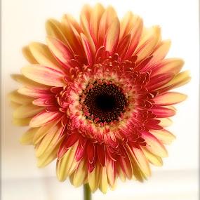 Bursting with color by Jennifer Lamanca Kaufman - Nature Up Close Flowers - 2011-2013