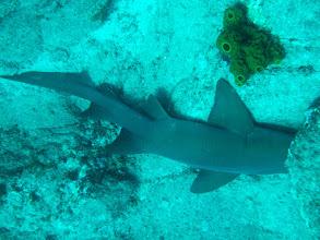 Photo: Shark