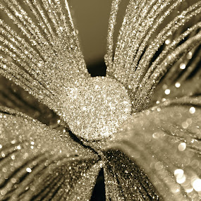 by Joelle McGraw - Artistic Objects Other Objects ( black and white, silver, christmas, sparkle, ornaments )