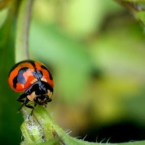 Exploring by Adnan Hidayat Prihastomo - Instagram & Mobile Other ( macro, red, ladybug, insect )