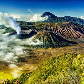 Mount Bromo by Erry Subhan - Landscapes Mountains & Hills ( sand, mount bromo, tourism, mount batok, travel, volcano, bromo tengger national park, indonesia, asia, rain forest, java, bromo, eruption )