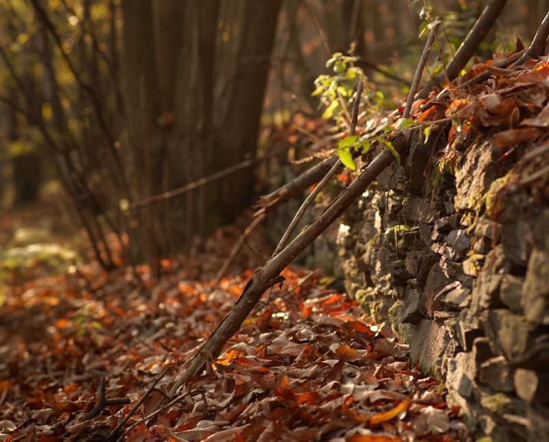 tristezza del bosco di i1rsv