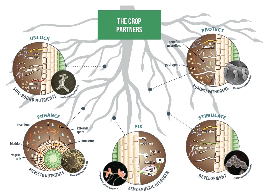 the Crop Partners