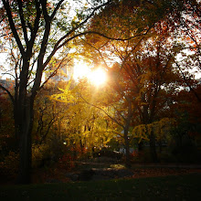 """Photo: """"Melted gold...""""Central Park in autumn. New York City.View the writing that accompanies this post here at this link: https://plus.google.com/u/0/108527329601014444443/posts/MyY72nLJ88N"""