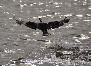 Photo: taking flight