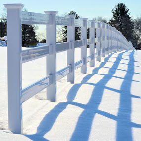 Fence and Shadow by Corinne Hall - Uncategorized All Uncategorized (  )