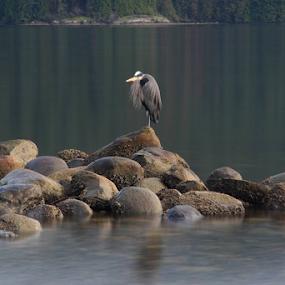 by Reinilda Sissons - Animals Birds (  )