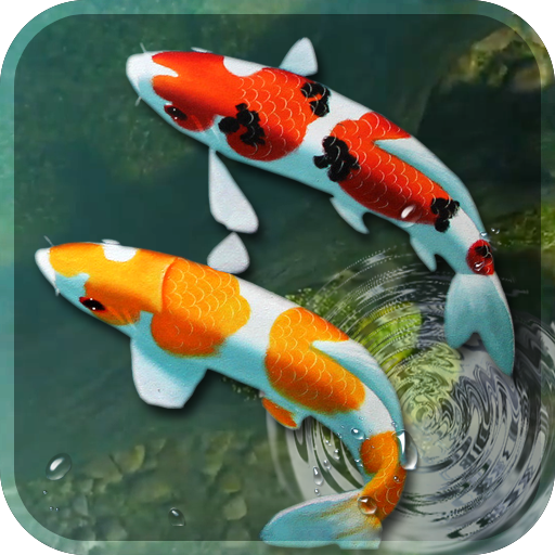 koi fish live wallpaper 3d aquarium background hd app apk free